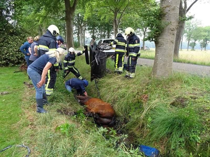 Brandweer bevrijdt paard uit sloot in Appelscha